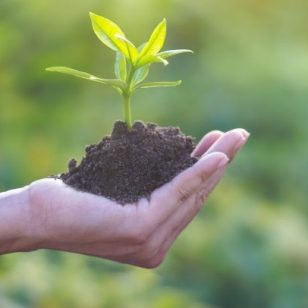 Human hand holding young plant with soil on nature background, Ecology, Investment, CSR, New Life concept